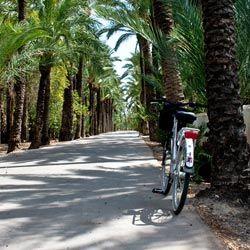 En bici por el palmeral de Elche