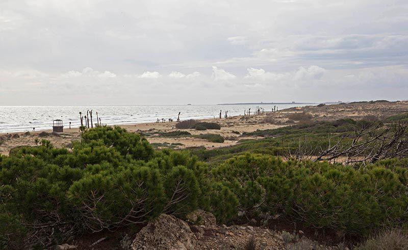 Playas de Elche El carabassi