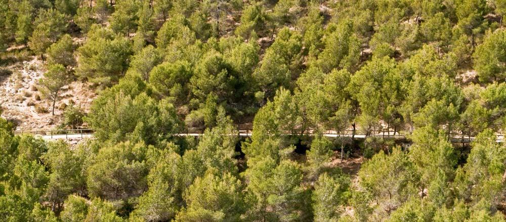Subida entre pinos de la ruta del faro del Albir
