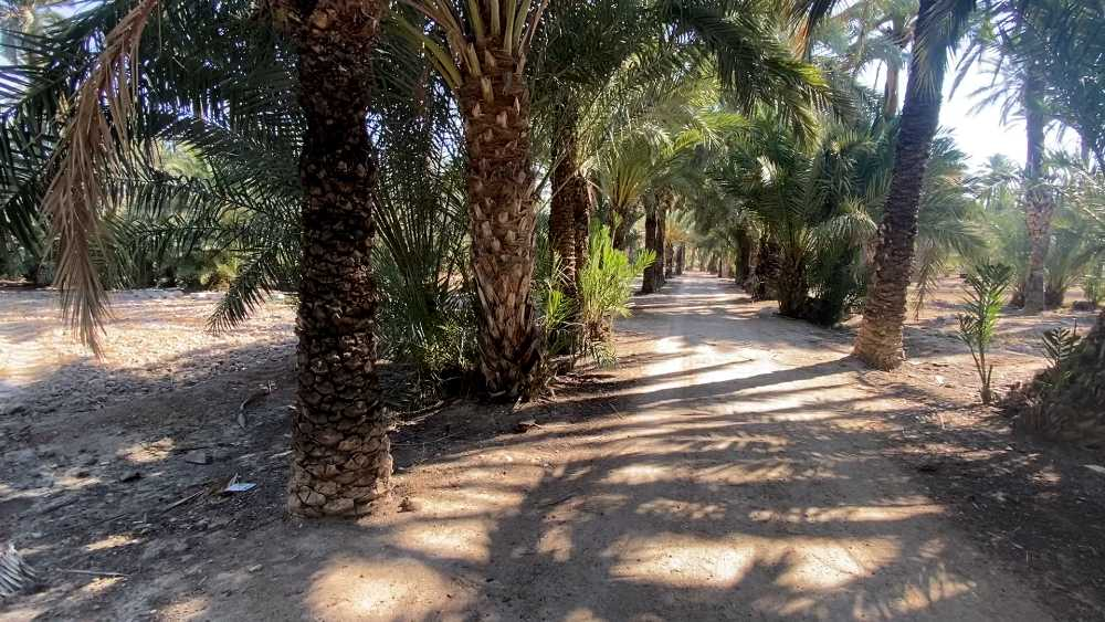 Parque Filet de Fora en Elche