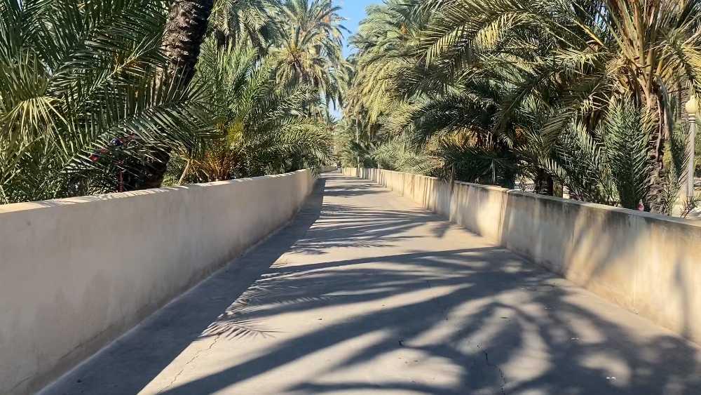 Camino de Felip en el Palmeral de Elche